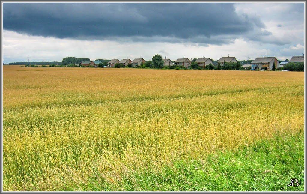 """""""Elite"""" village + Field of Gold. / Посёлок Элитный + поле., Советское"""