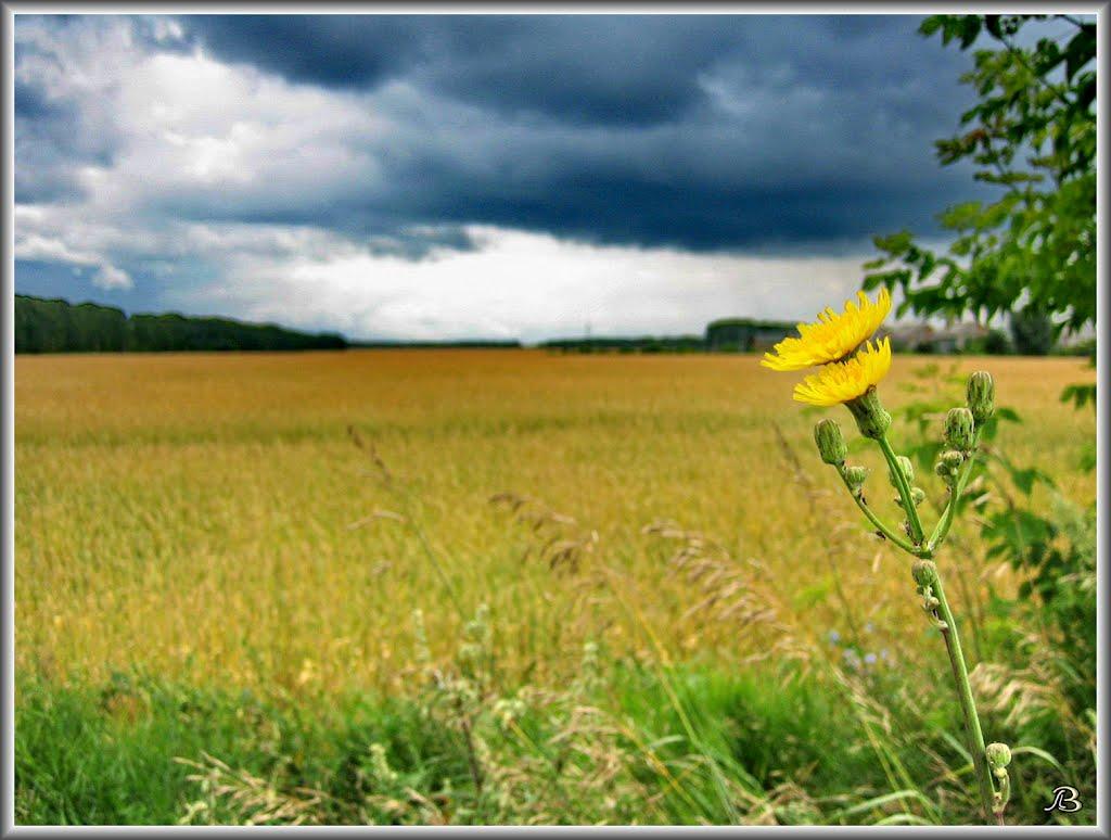 Field, Советское