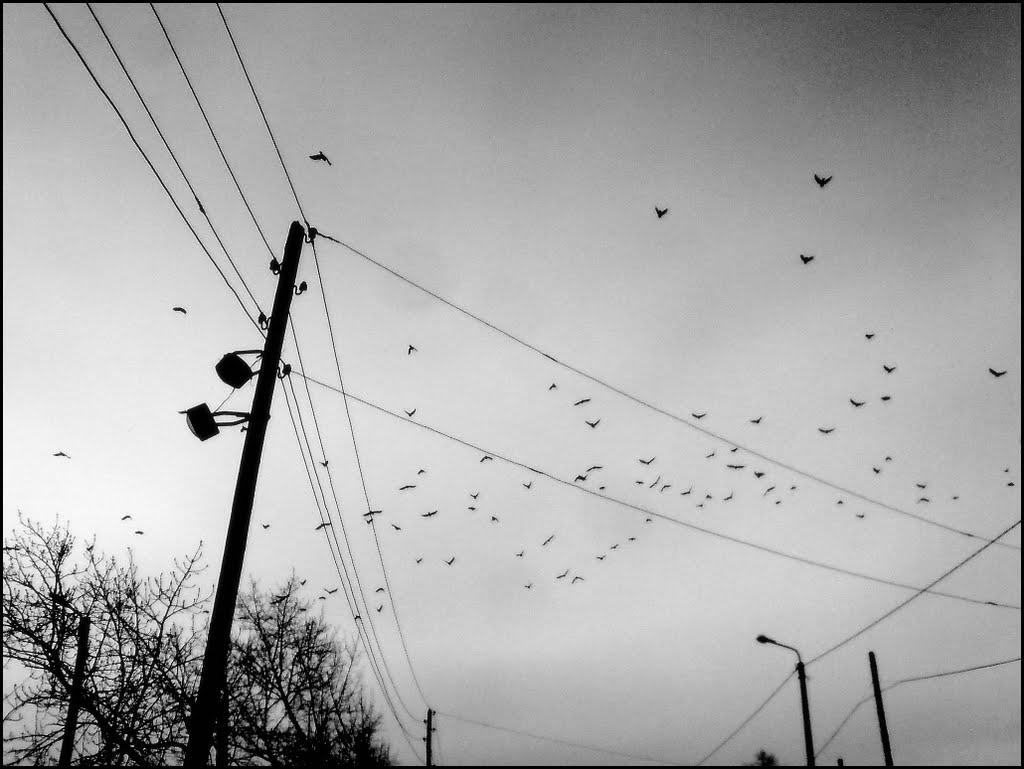 25.03.2009, Забайкальск