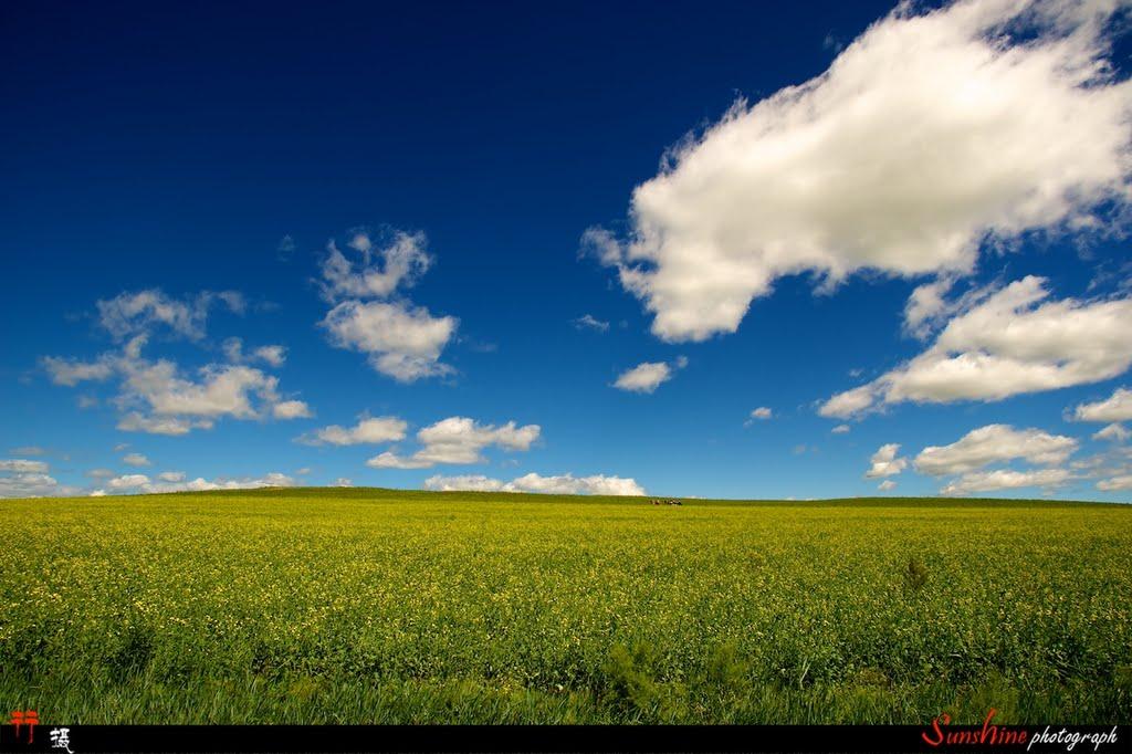 油菜花、蓝天、白云, Калга