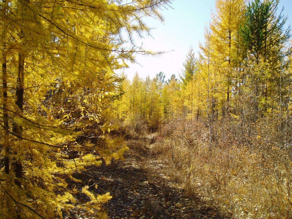 Таежная дорога Могочинского района, Тупик