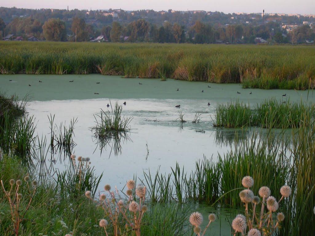 Алатырский орнитологический заказник  - Alatyr Ornithological Reserve, Алатырь