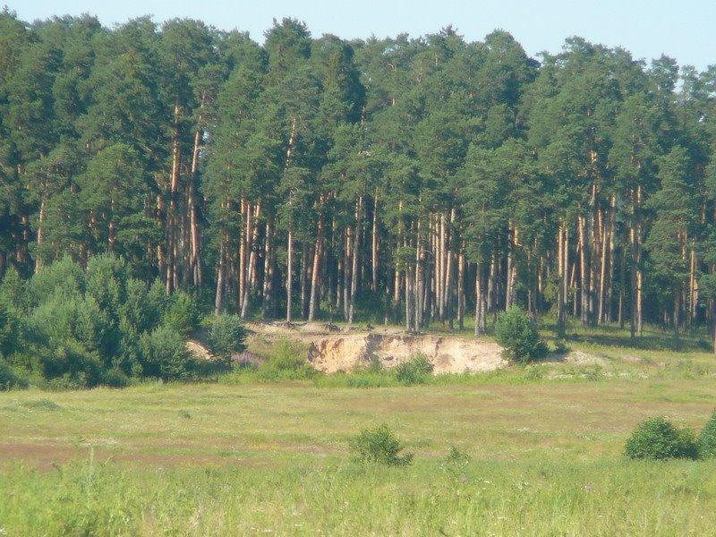 лес, Комсомольское