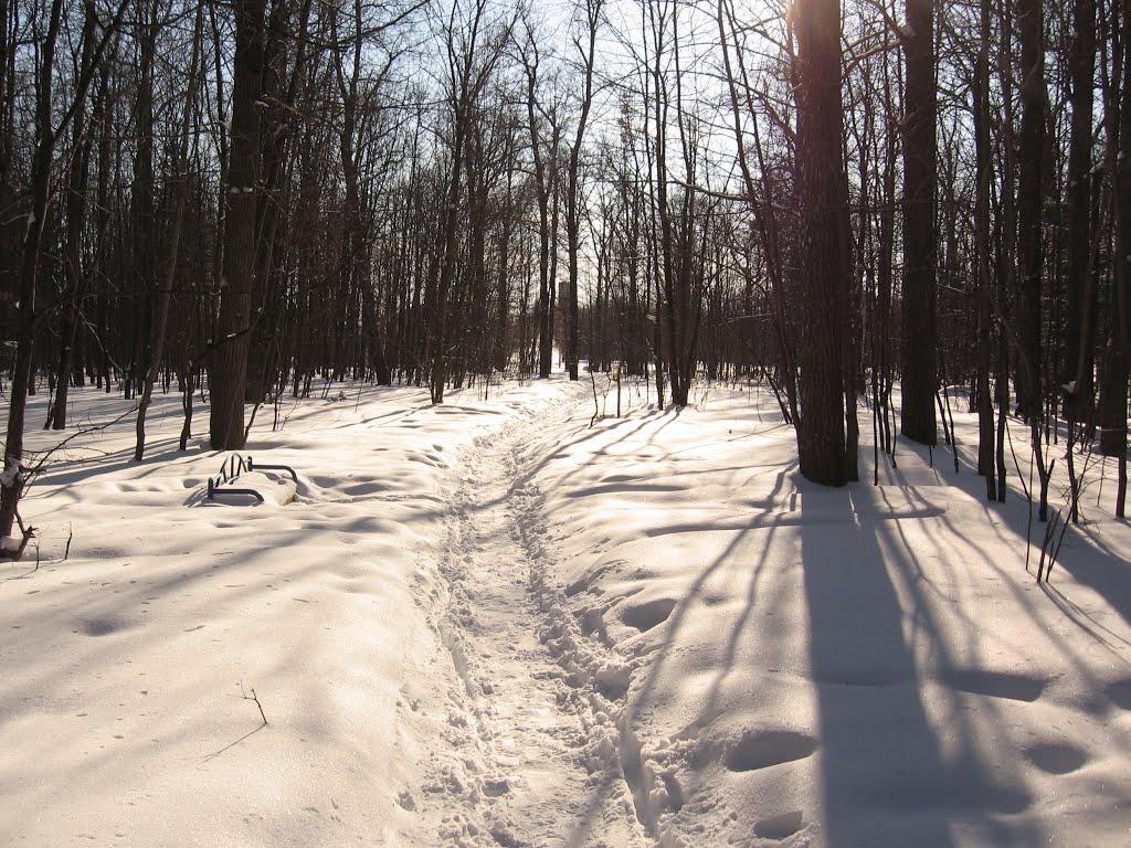 Зимний лес, Кугеси