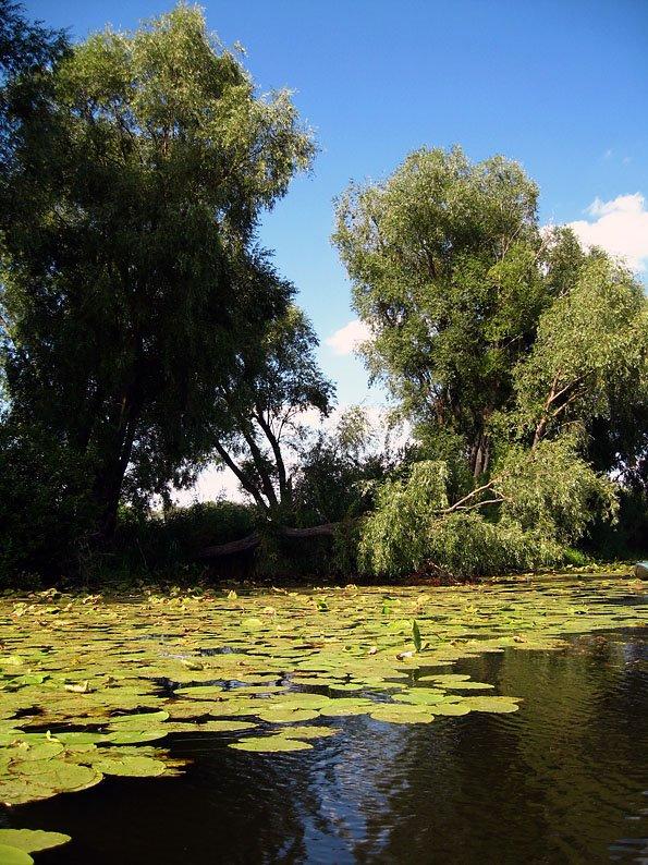 На озере, Шемурша