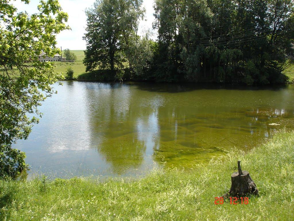 Большой пруд., Шемурша