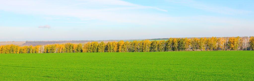 Озимое поле, Шемурша