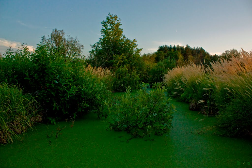 В Шумерлинских садах, Шумерля