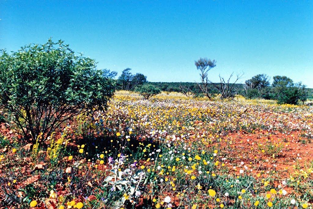 le désert en fleurs, Бунбури