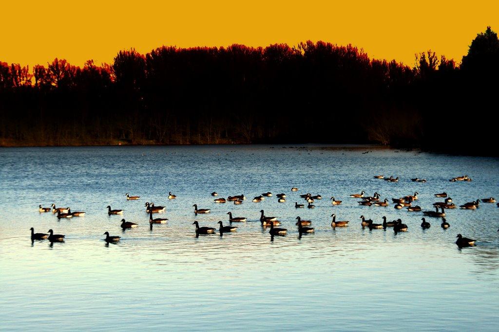 Winter lake, Алост