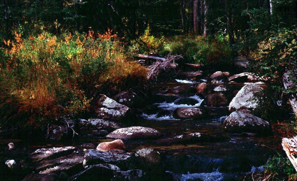 Victor Creek on the Loon Lake trail, Барли
