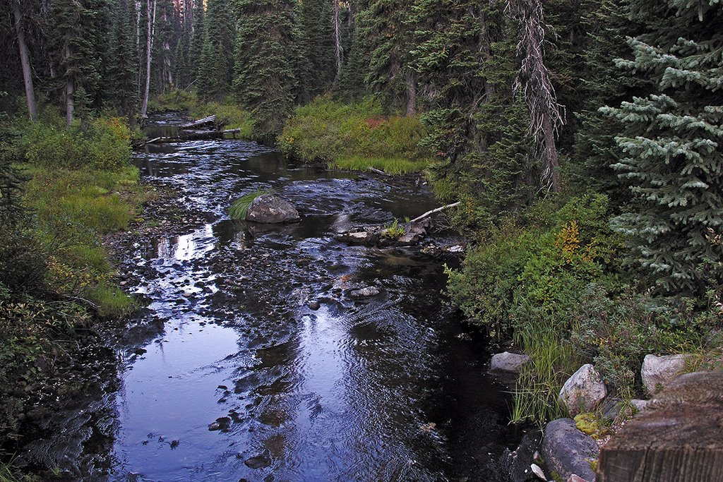 Colt Creek, a few miles south of Savage Pass, Bitterroot Mountains, Барли