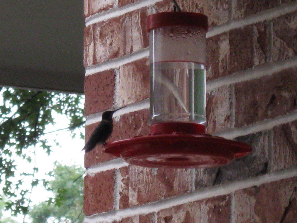 Hummingbird, Тонтитаун
