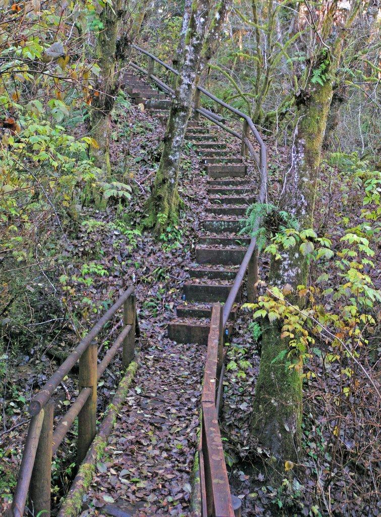 Sherwood Forest trail, Абердин