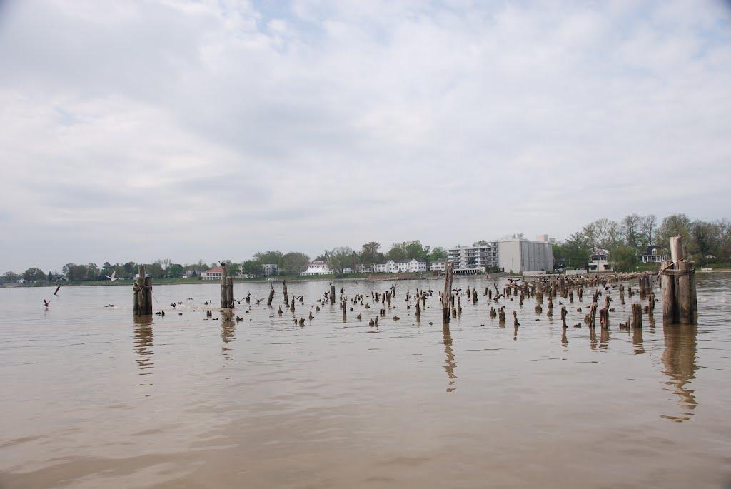 Old wharf pilings in the Rappahannock River at Tappahannock Virginia, Таппаханнок