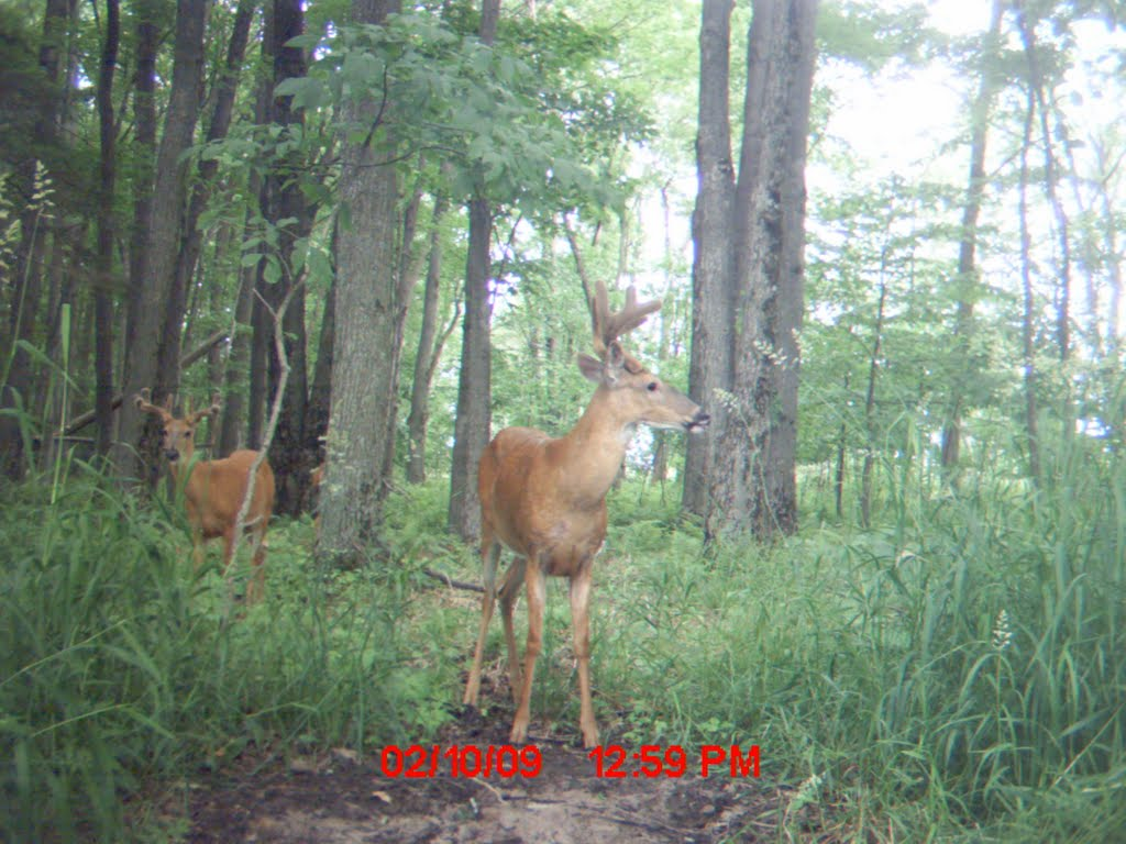 Trail Camera On Oak Ridge, Ракин