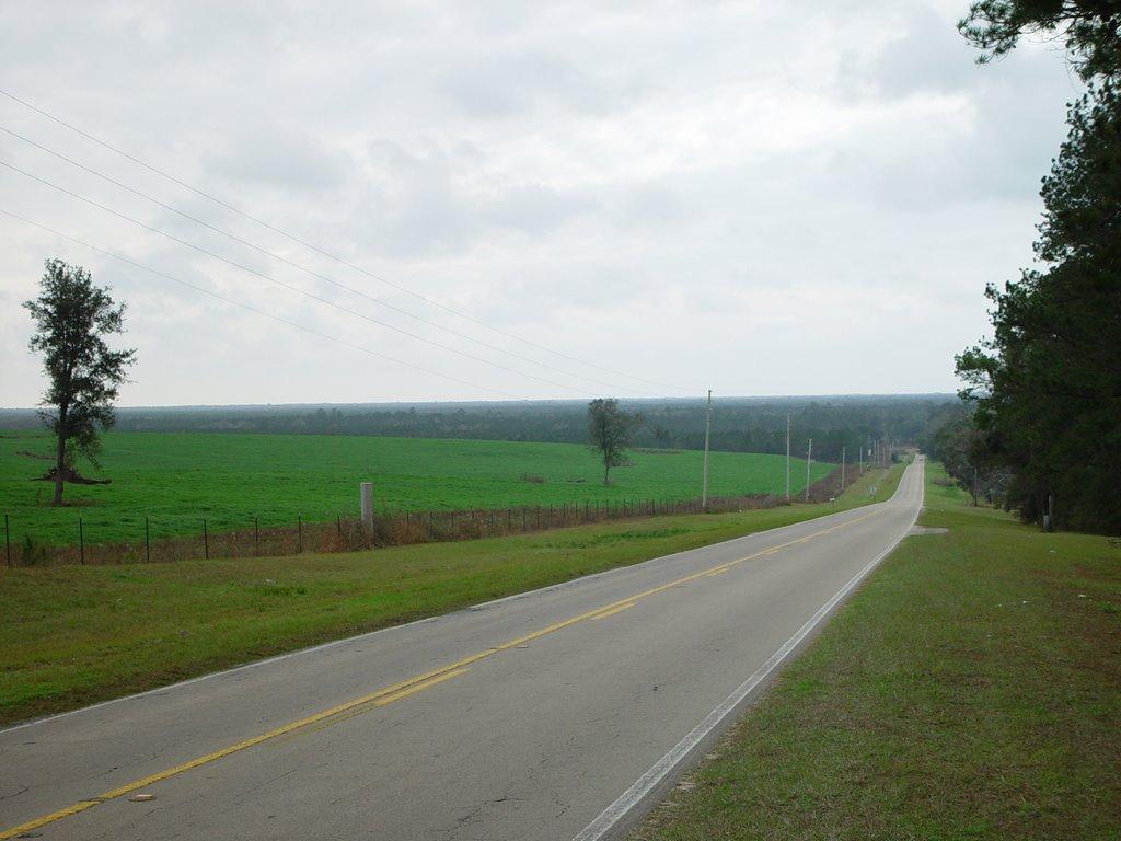 looking south toward Wacissa River, Thomas City, Florida (12-31-2006), Аттапулгус