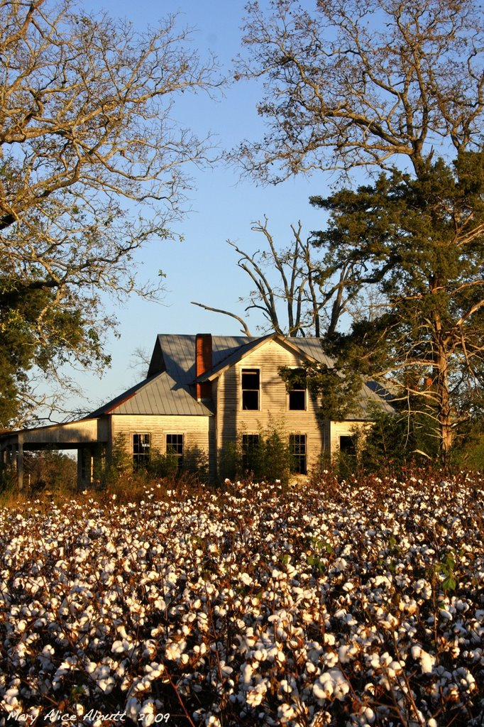 Way down south in the land of cotton . . ., Вена