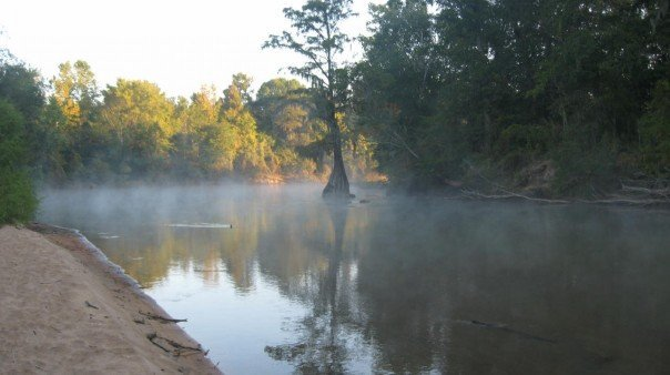 Ocmulgee Cypress in the Morning Mist, Вест Поинт