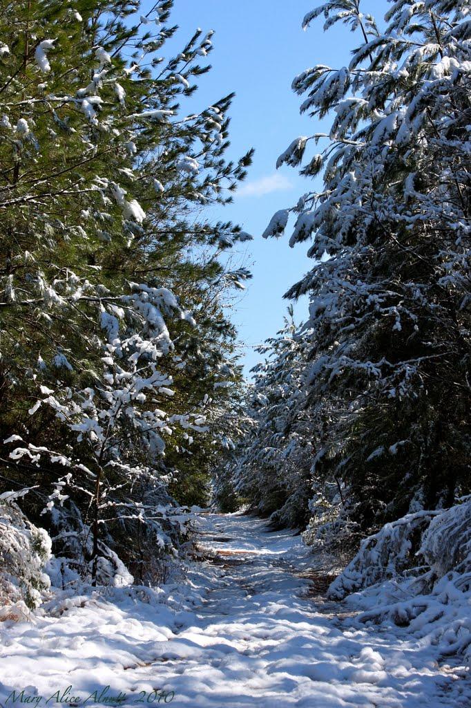 Transforming the familiar ( . . .  a not so ordinary Georgia snow.), Вест Поинт