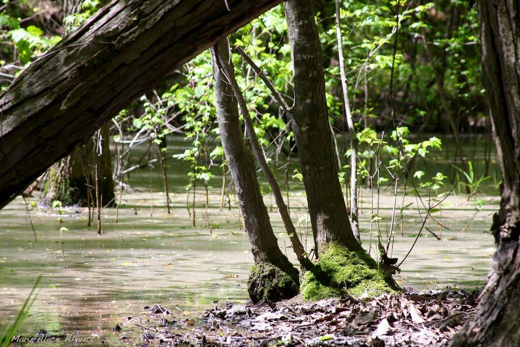 Hidden swamp, Вест Поинт