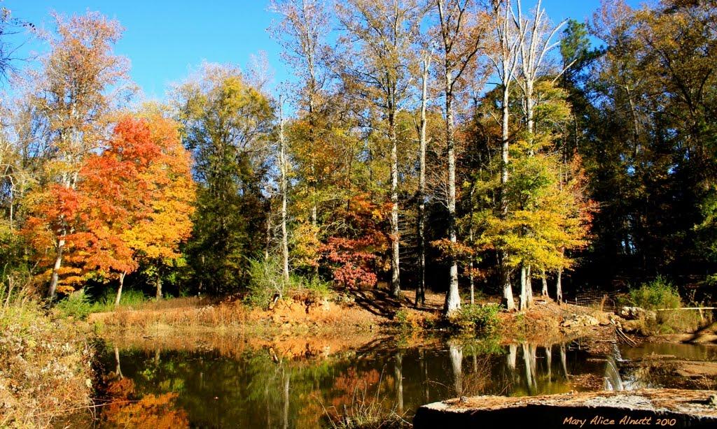 Faithful reflections of Autumn wander along Tobbler Creek., Вилмингтон-Айленд
