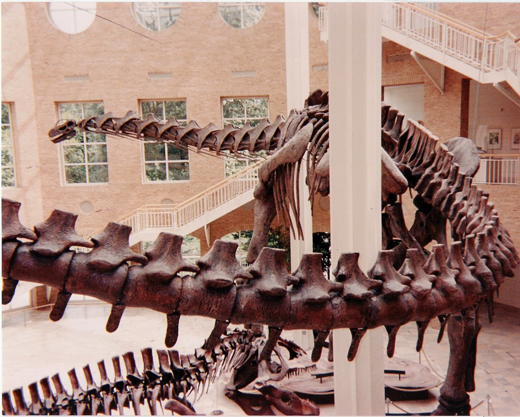 Argentinosaurus & Giganotosaurus Giants of Mesozoic, Грешам Парк