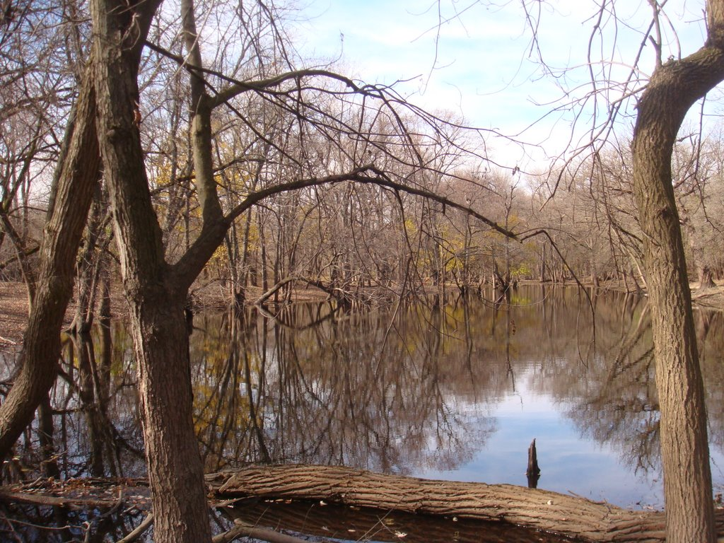 water body in the forest preserve, Елмвуд Парк