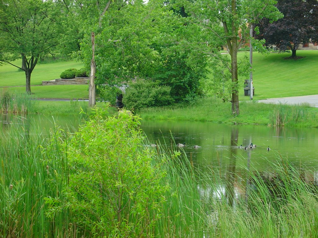 DSC08185  The Pond 6/10/06 - S view, Брук