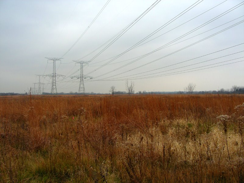 Des Plaines Conservation Area with high voltage power lines, Брук