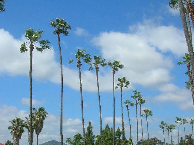 La Mesa Blvd. Palm Trees, Ла-Меса