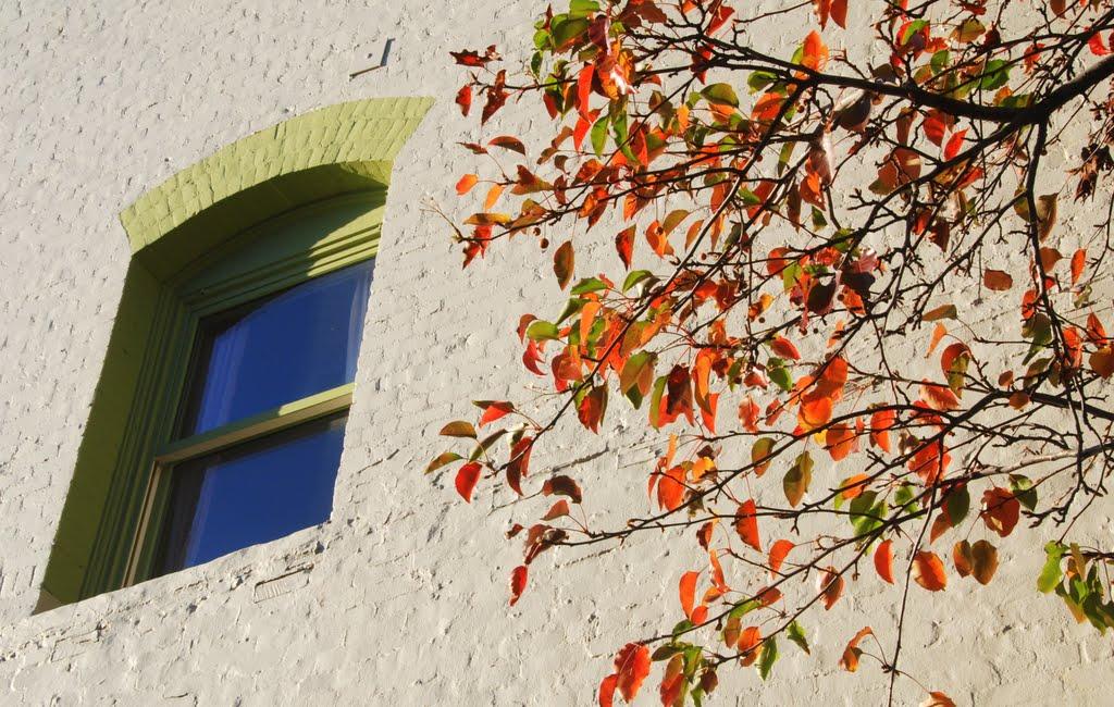 Fall Colors agains wall and a window, Petaluma, California, Петалума
