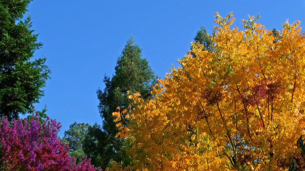 Autumn Below the Redwoods, Плисант-Хилл