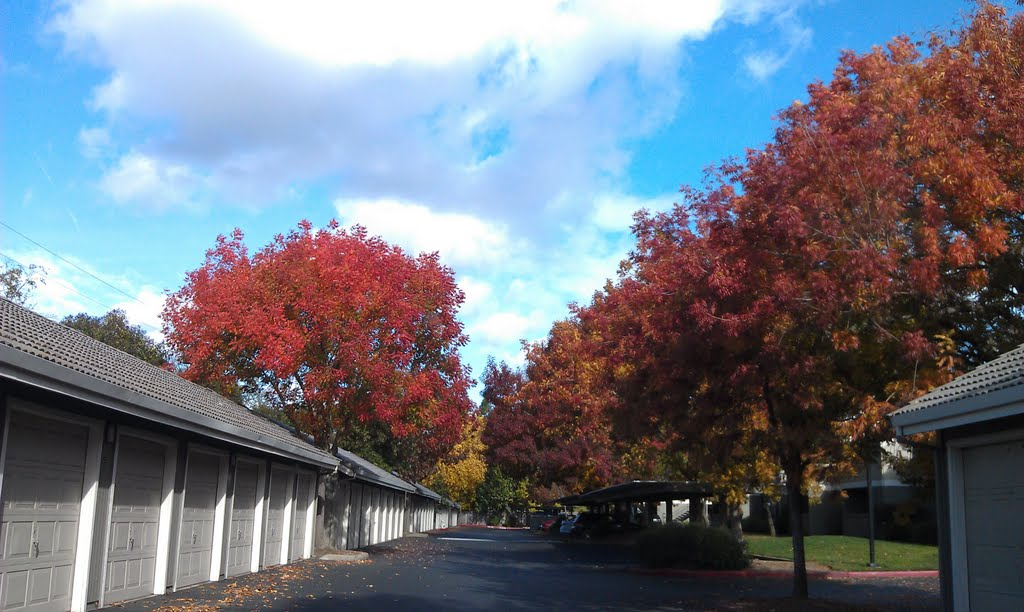 Fall Color in Zinfandel Village, Ранчо-Кордова