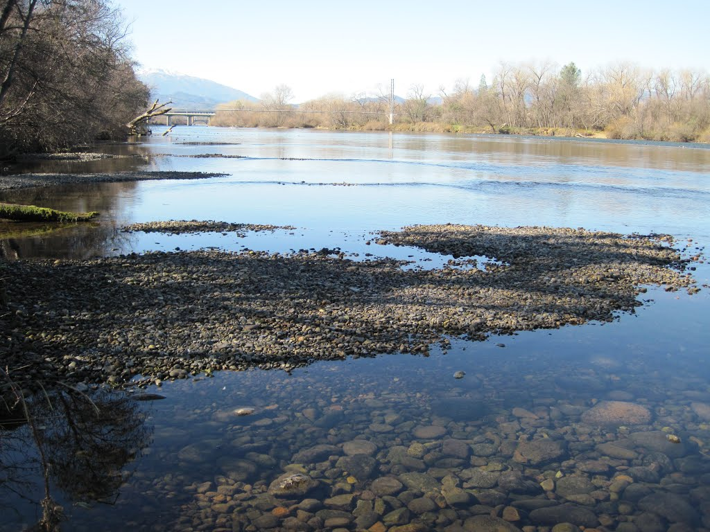 Sacramento River Site 2 (Right Bank) - Dewatered Salmon Redd at Flow 4500 cfs 1/27/2011, Реддинг
