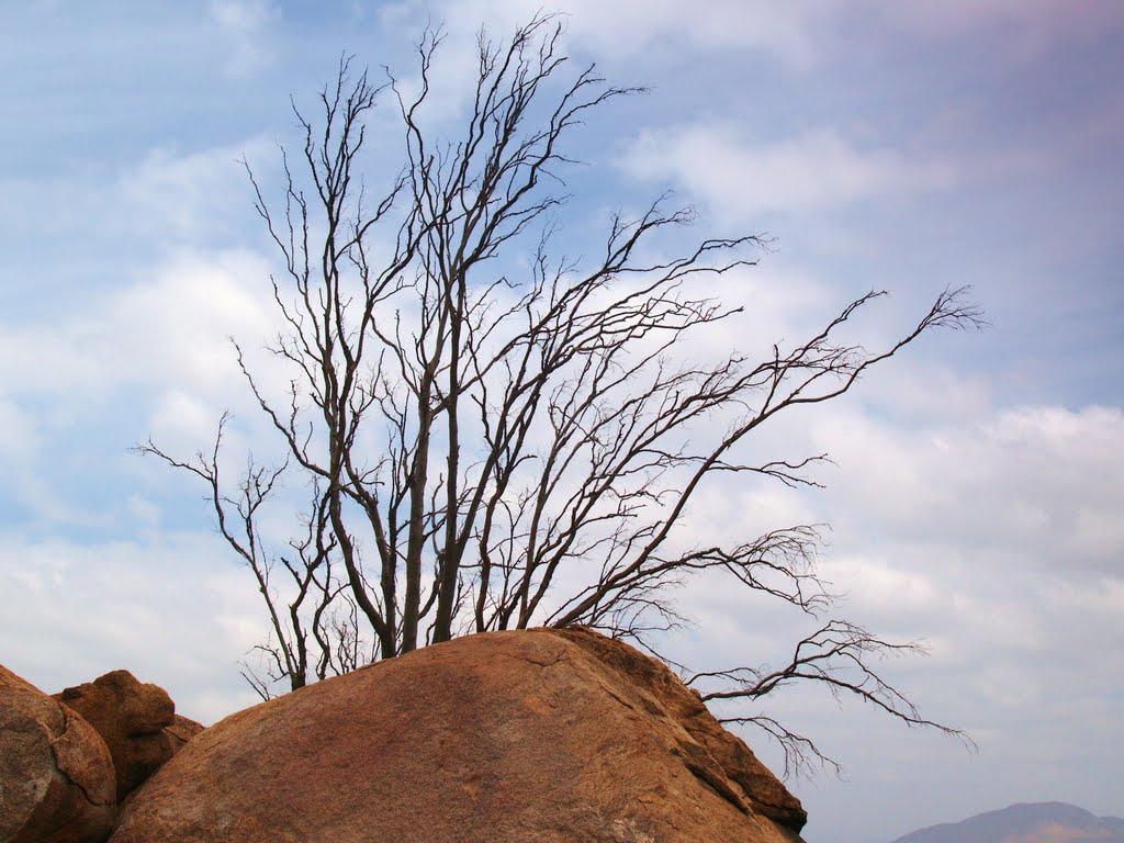 Tree and Rock, Mt. Rubidoux, Риверсайд