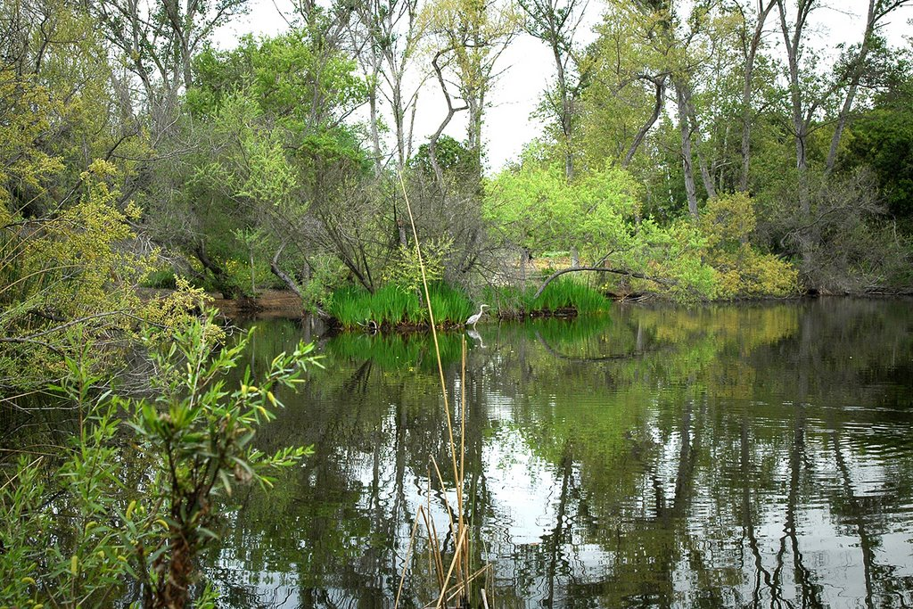 El Dorado Park, Long Beach, CA South Pond, Россмур