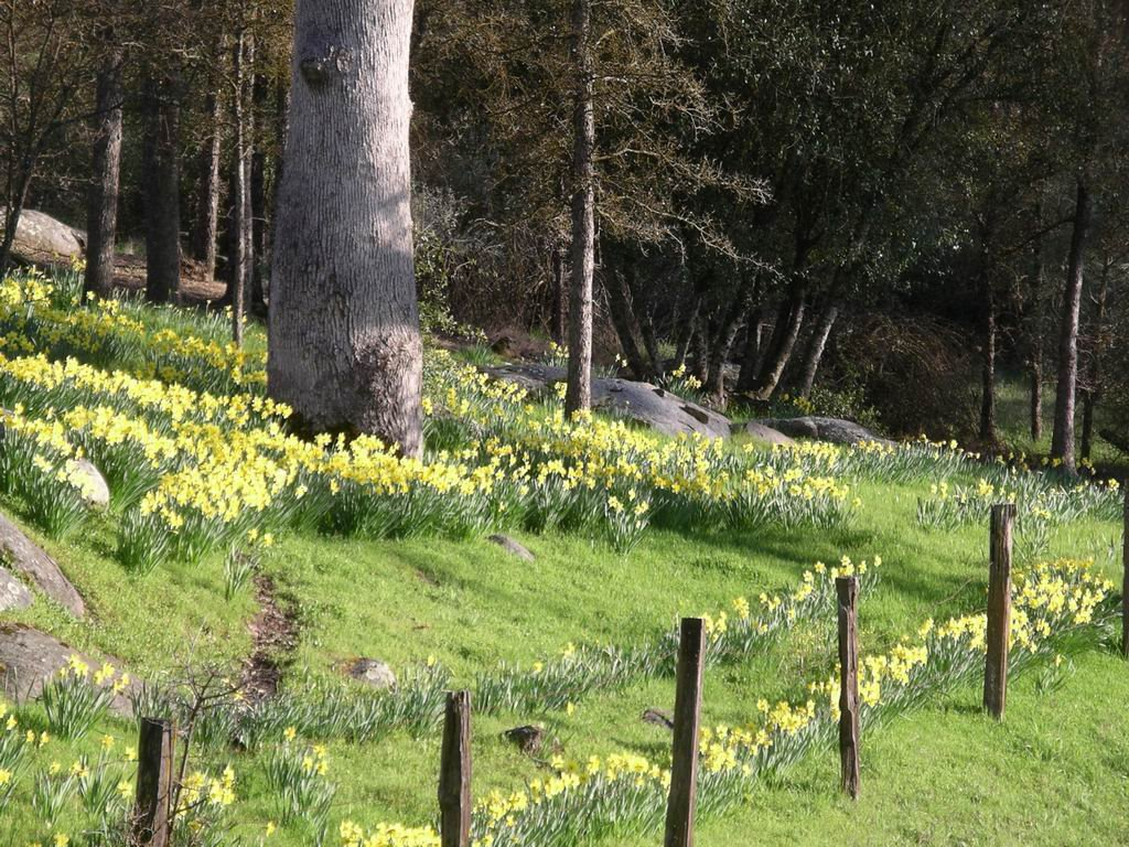 Harrys Daffodils, Сан-Лоренцо