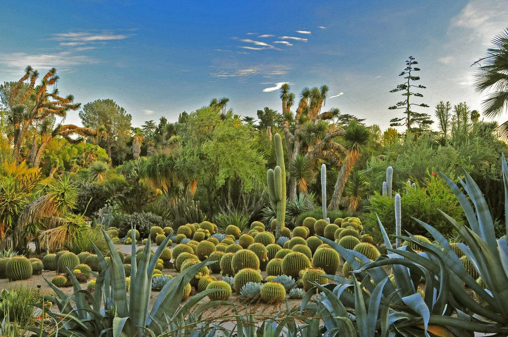 Desert Garden with Henri Rousseau colors, Huntington Botanical Garden San Marino California, Сан-Марино
