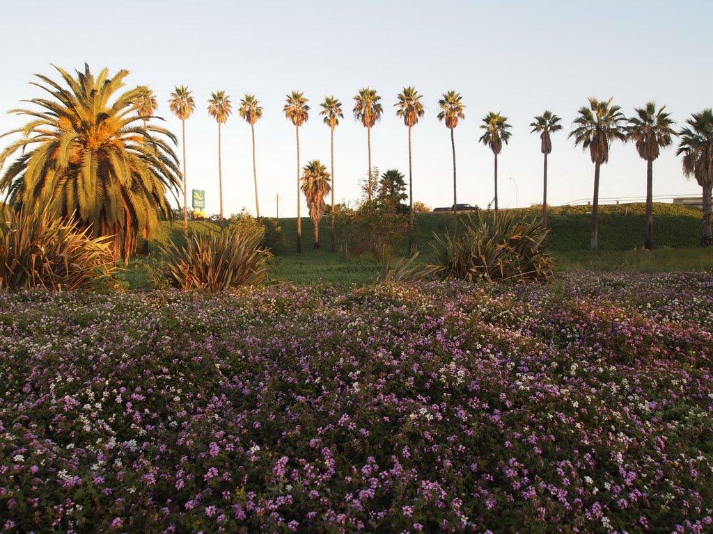 洛杉矶酒店附近, Серритос