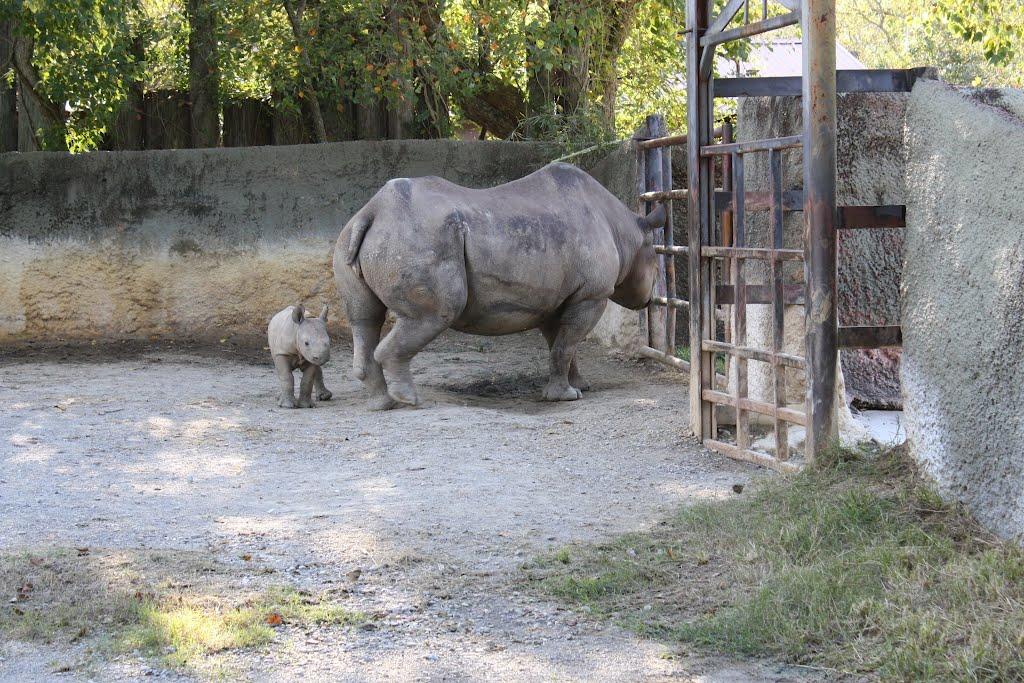 Zoo, Бейкер