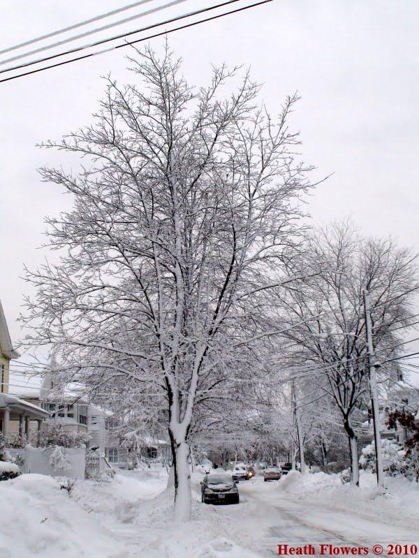 Winter Tree, Белмонт