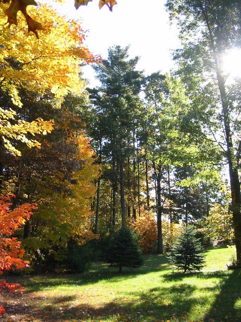 Back Yard, Fall, Метуэн
