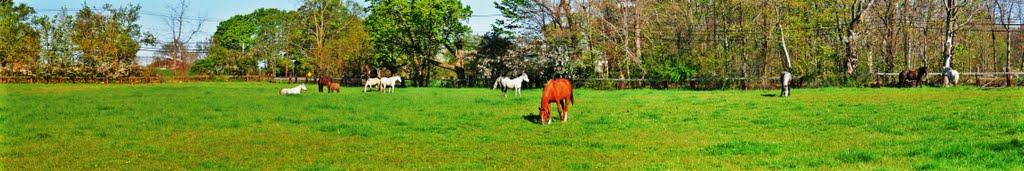 The Herd Early Morning, Camp DiCarlo, Framingham, Mass, Фрамингам