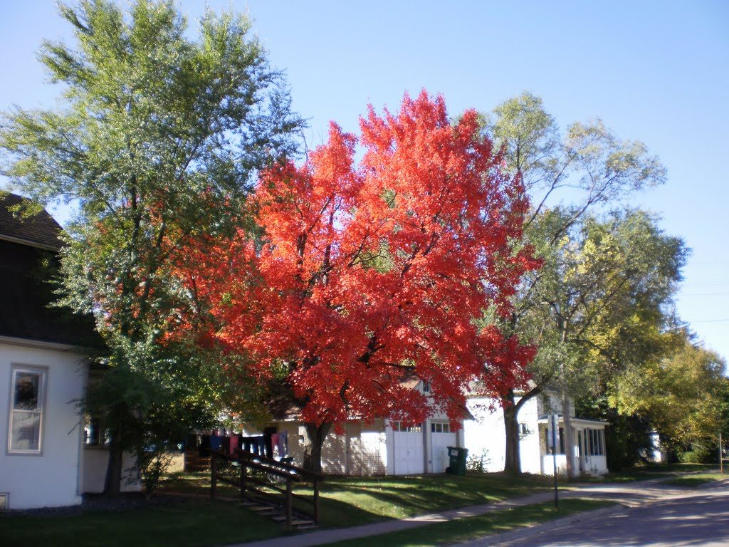 MAPLE TREE SHOWING OFF, Винона
