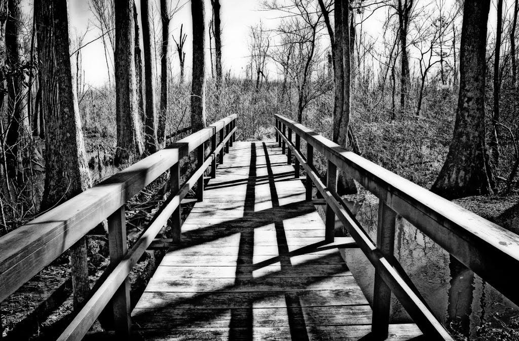 Cole Creek Swamp, Сумралл