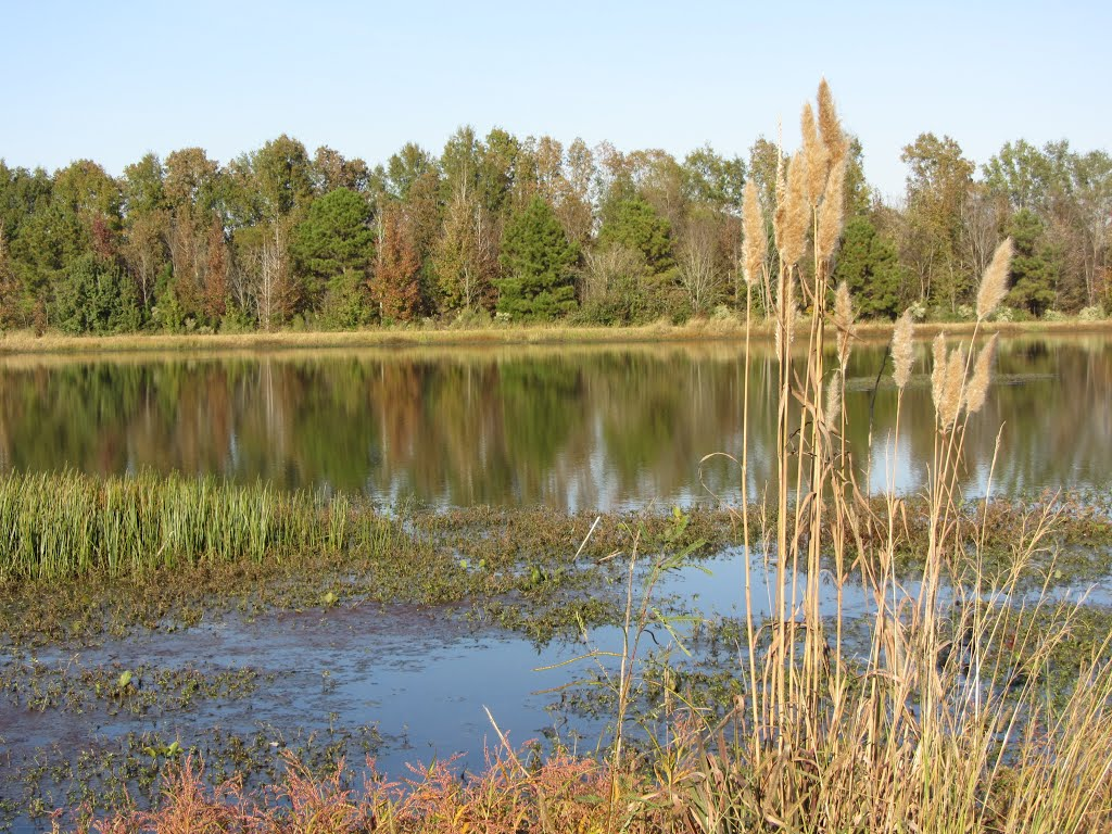 Pond at Trim Cane Creek WMA, Тилертаун