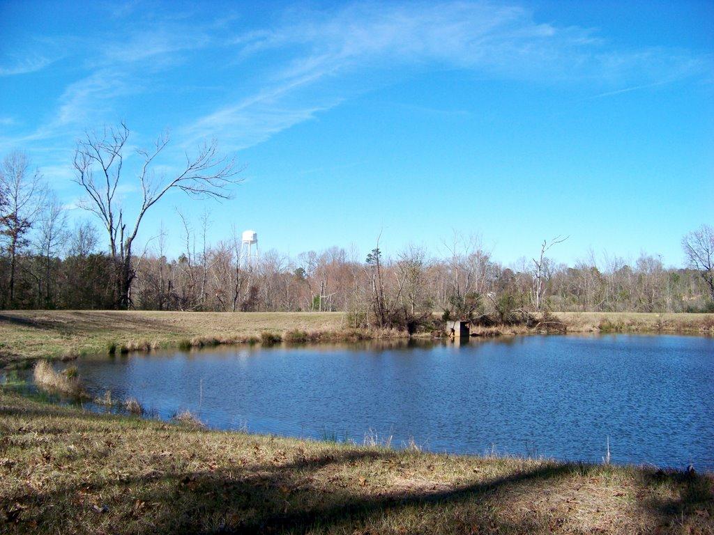 Pond, Тутвилер