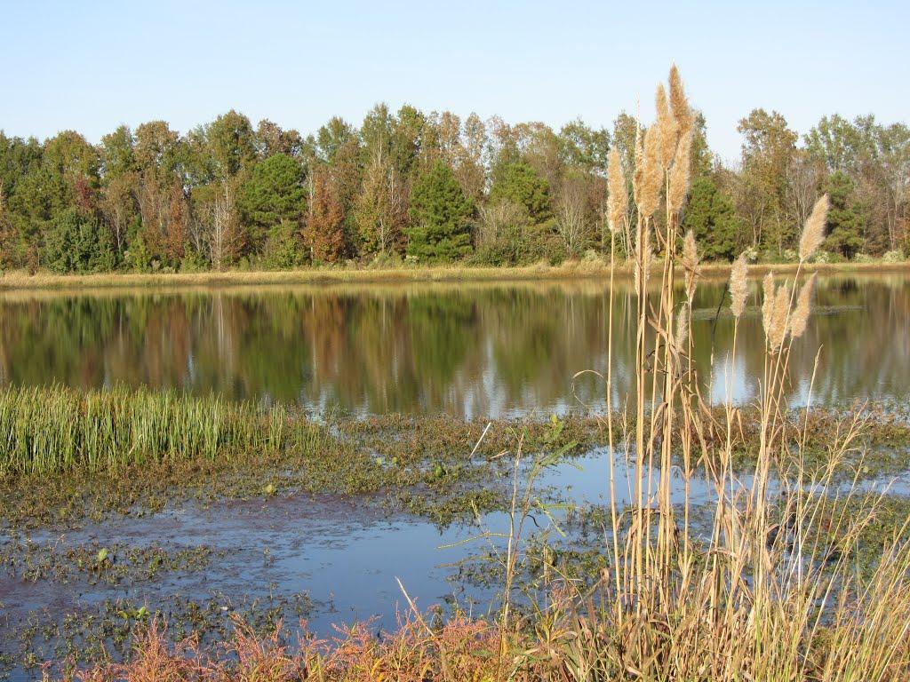 Pond at Trim Cane Creek WMA, Тутвилер