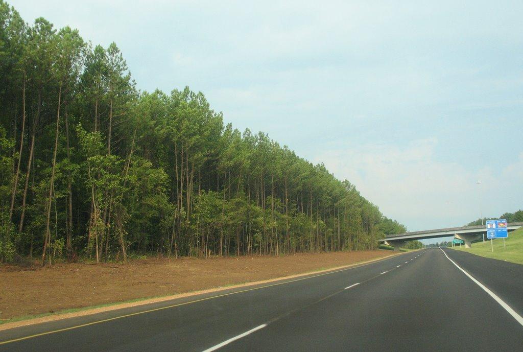 Tree-lined 20, Флаууд